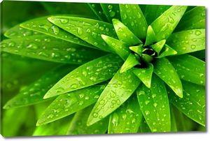Мокрой листве