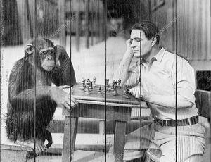 Человек играет в шахматы с обезьяной