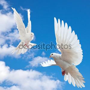 голубь в воздухе с широко открытыми крыльями