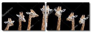 Жирафы в ряд
