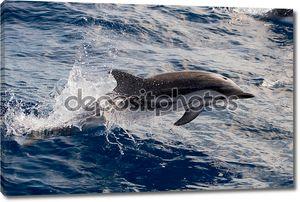 Дельфины во время прыжков в глубокое синее море