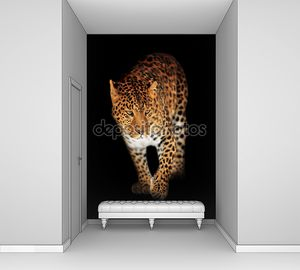 Леопард на черном
