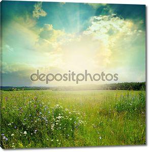 Зелёный луг в солнечный день