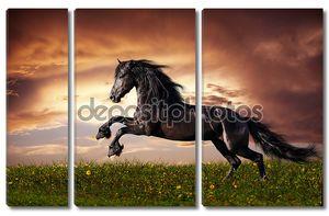 Черная лошадь галопом