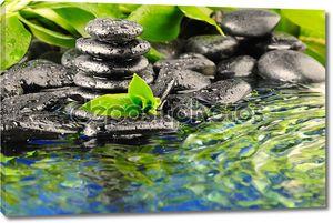 Зеленый бамбук в воде