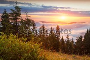 Рассвет в Карпатских горах
