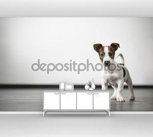 наблюдайте за собакой