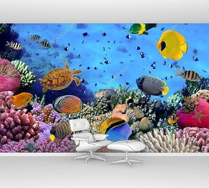 Коралловая колония