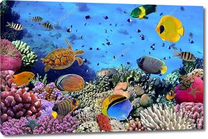 Изображение коралловой колонии