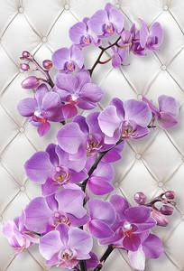 Орхидея стереоскопическая