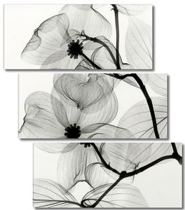 Прозрачные цветы