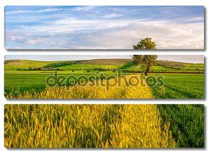 Поле пшеницы с деревом