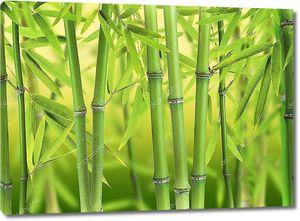 Бамбуковые побеги