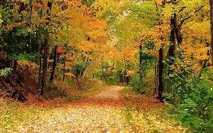 Пестрая дорожка в лесу