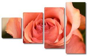 Красный Розовый бутон розы цветок крупным планом
