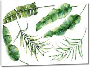 Акварель листьев  тропических деревьев