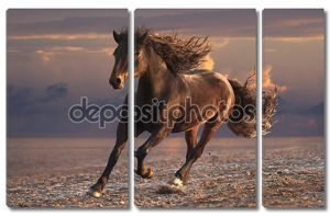 Запуск лошади на песчаный пляж заката.
