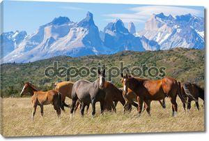 дикие лошади в национальном парке