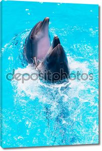 Два дельфина плавают в бассейне