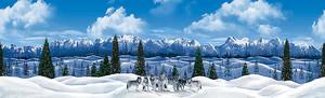 Волки в Сибири