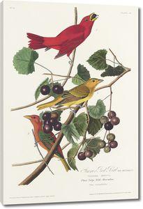 Летняя красная птица