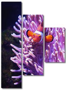 Рыбка в ярких кораллах