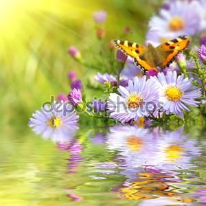 Два бабочка на цветах с отражением