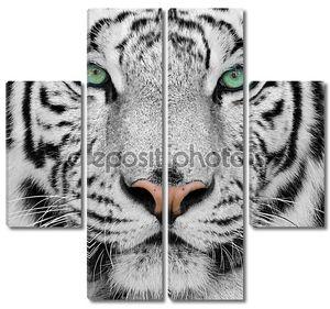 великолепный суматранский тигр