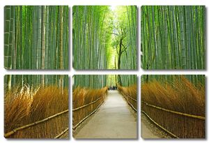 Дорога вдоль высокого бамбука