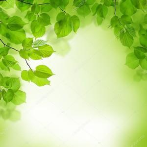 зеленые листья границы, абстрактный фон