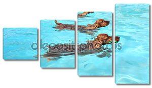 Плавательный собаки
