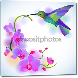 Радуга колибри с фиолетовыми орхидеями