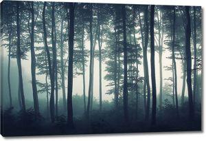Туманный хвойный лес