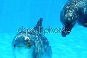 несколько дельфинов