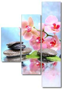 Композиция с красивой орхидеей