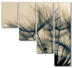 абстрактный цветок одуванчика фон, экстремальных крупным планом. большой Одуванчик на естественный фон