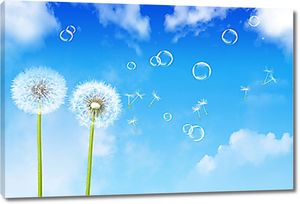 Одуванчики на фоне неба