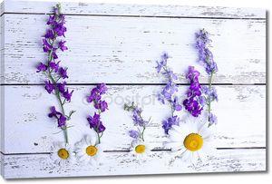 различные красивые полевые цветы