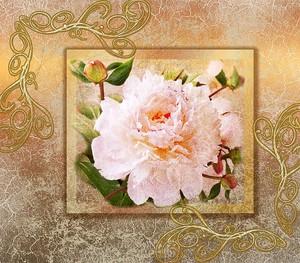 Розовая роза в рамке