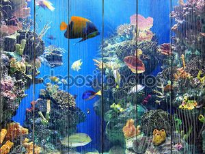 красочный и динамичный аквариум жизни