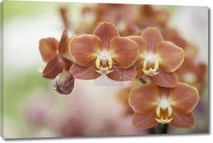 съемка крупным планом красных цветов орхидеи
