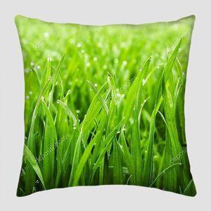 Трава с каплями утренней росы