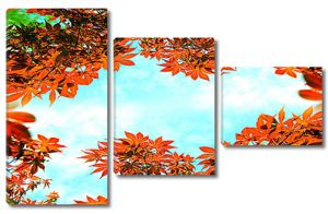 Небо сквозь осеннюю листву