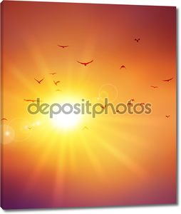 Птицы летят в закат
