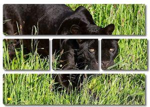 Черный ягуар в траве