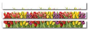 Свежие Весенние тюльпаны