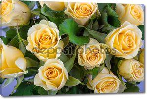 Желтая роза с зеленым фоном