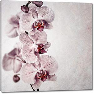 Винтажные орхидеи