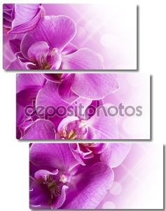 фиолетовые цветки орхидеи