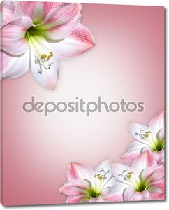 Амариллис розовый цветок граница